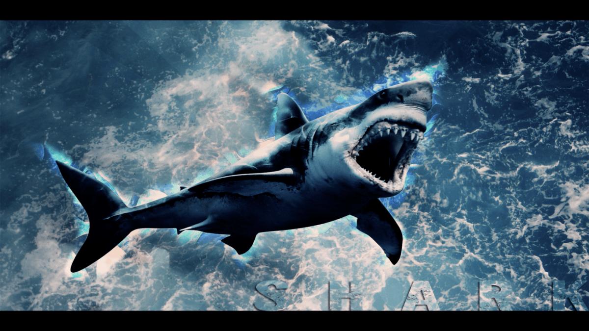 3880432 shark wallpaper e1522746331584