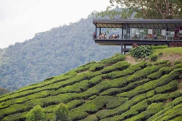 cameron highlands in 8 hours001