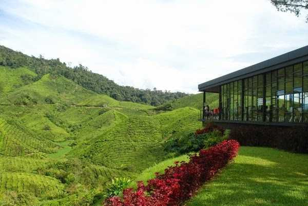 cameron highlands in 8 hours007