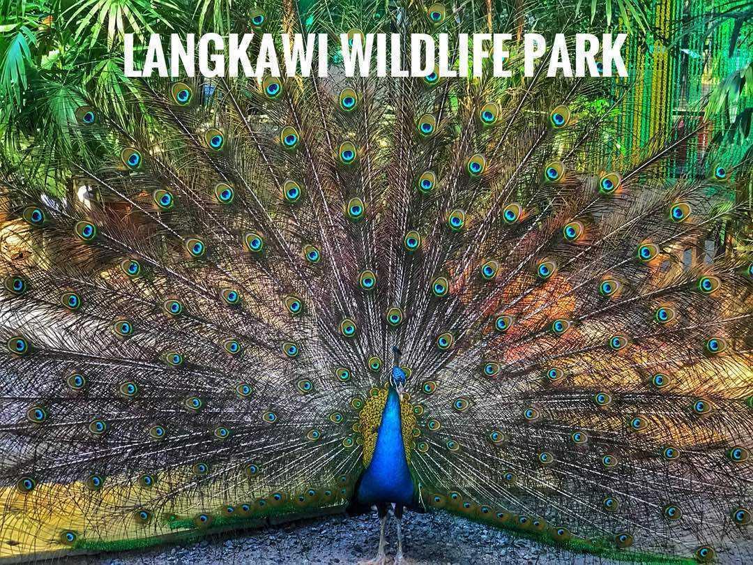 LANGKAWI Wild tour –Bird park