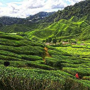 cameron highlands in 8 hours008