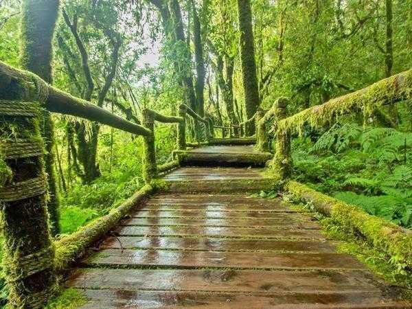 Mossy Forest walkway Cameron Highlands ca28a5f2 5e09 480b a54e 8d9e84fa11b5 grande1